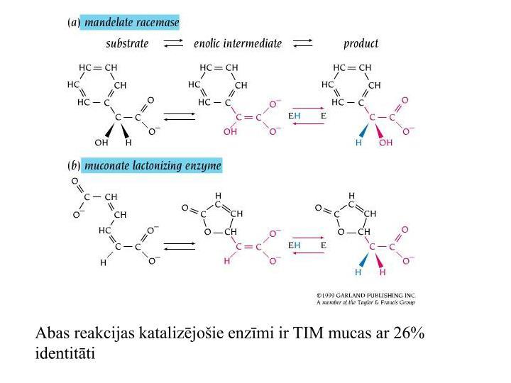 Abas reakcijas katalizējošie enzīmi ir TIM mucas ar 26% identitāti