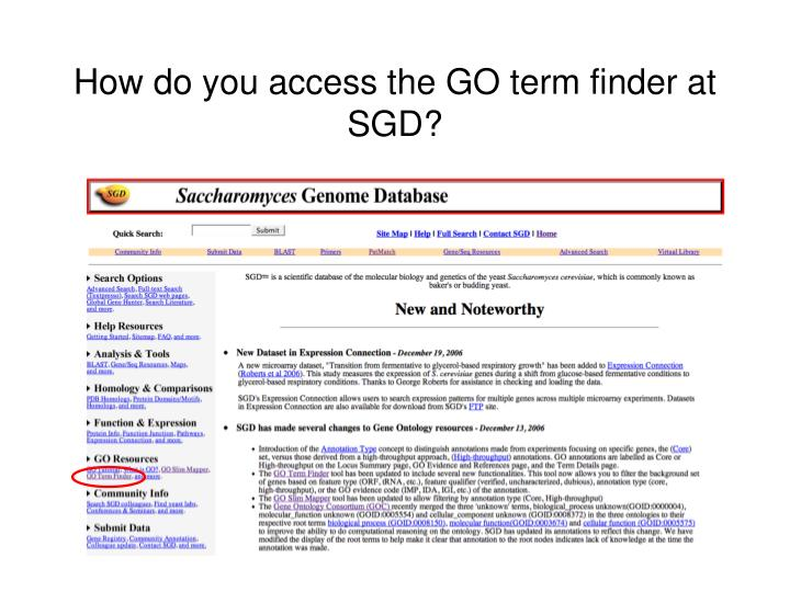 How do you access the GO term finder at SGD?