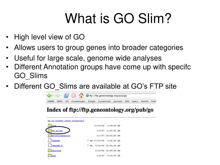 What is GO Slim?