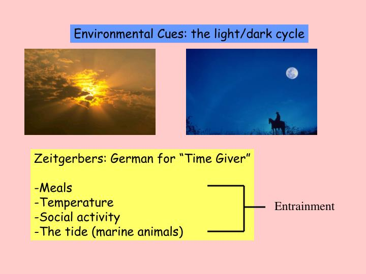 Environmental Cues: the light/dark cycle