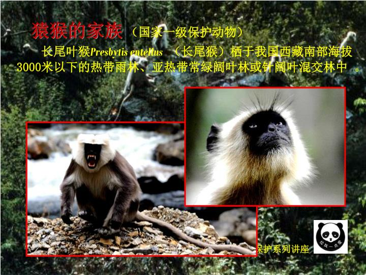 猿猴的家族
