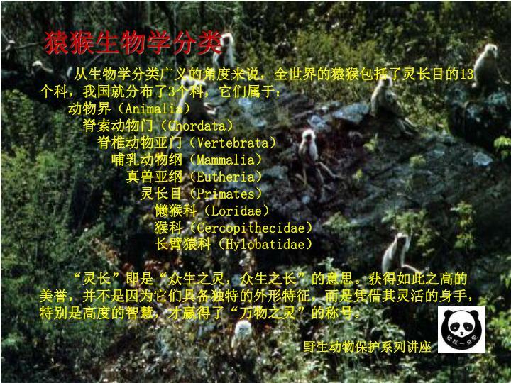 猿猴生物学分类
