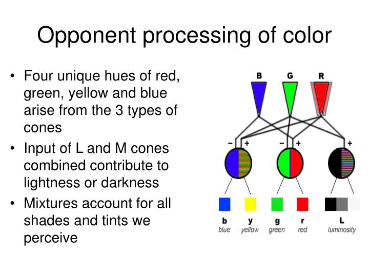 Opponent processing of color