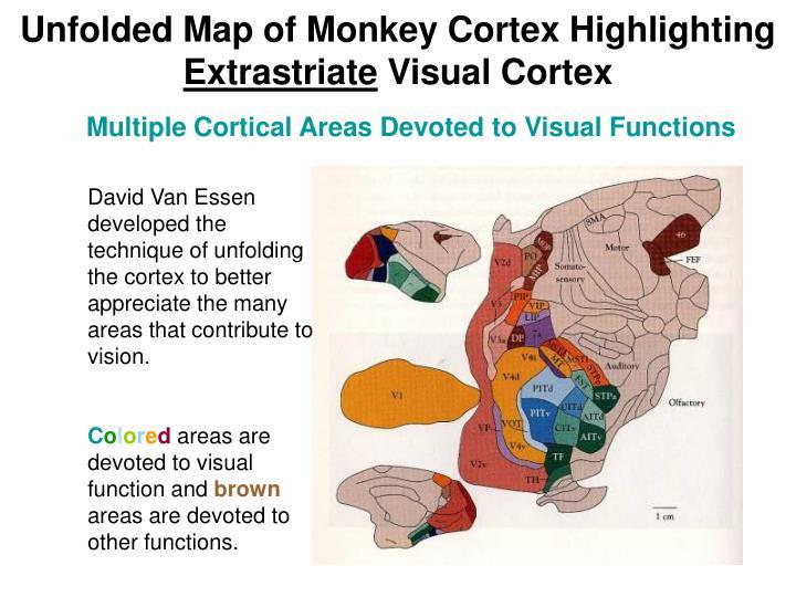 Unfolded Map of Monkey Cortex Highlighting