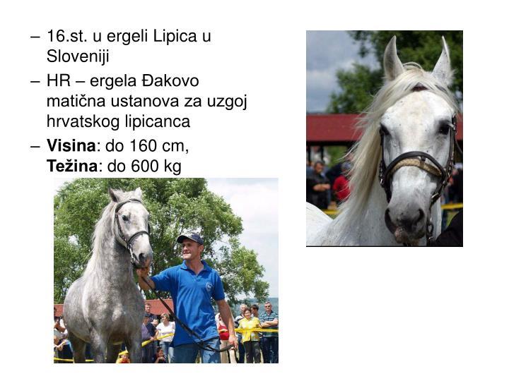 16.st. u ergeli Lipica u Sloveniji