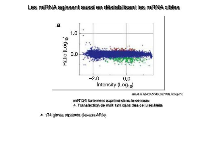Les miRNA agissent aussi en déstabilisant les mRNA cibles