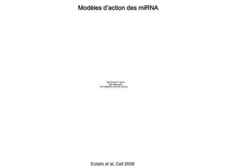Modèles d'action des miRNA