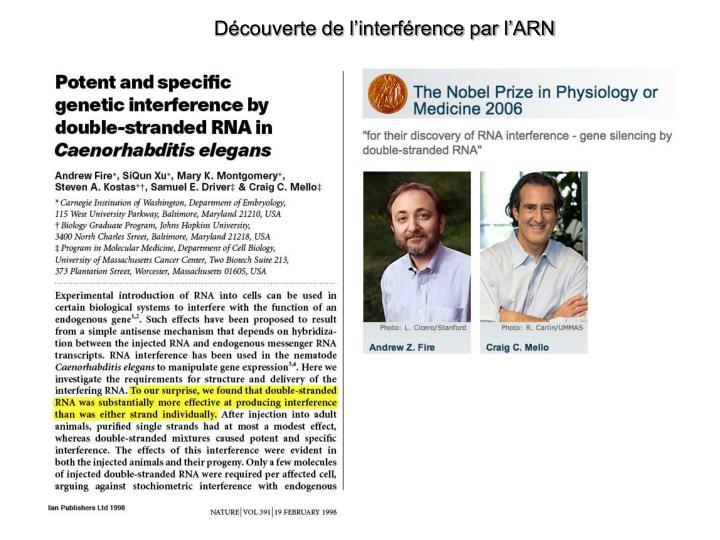 Découverte de l'interférence par l'ARN