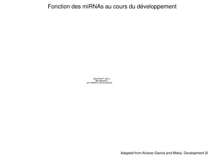 Fonction des miRNAs au cours du développement