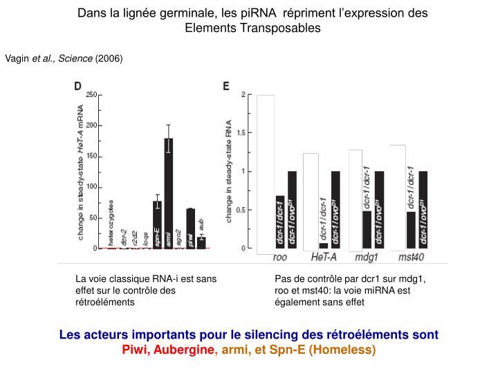 Dans la lignée germinale, les piRNA  répriment l'expression des Elements Transposables
