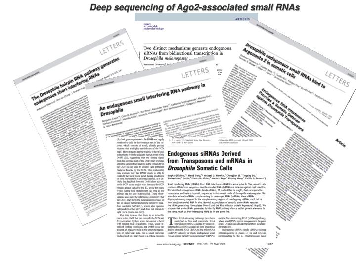 Deep sequencing of Ago2-associated small RNAs