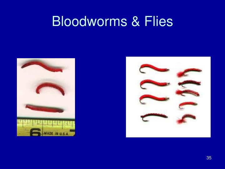 Bloodworms & Flies