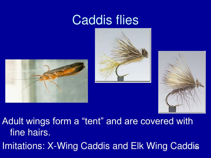 Caddis flies