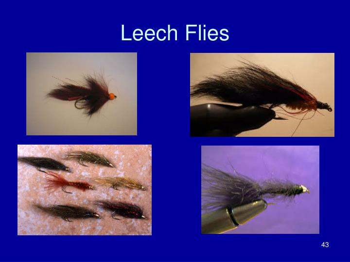 Leech Flies