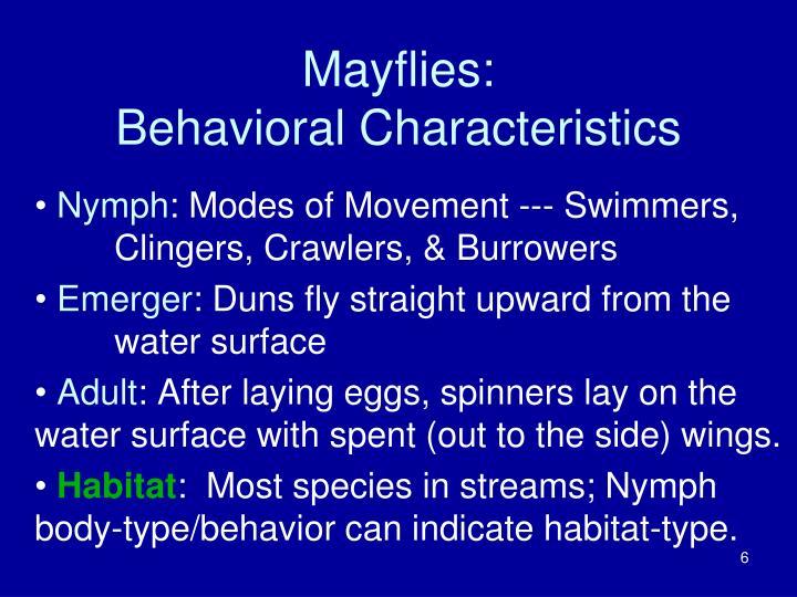 Mayflies: