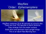 mayflies order ephemeroptera