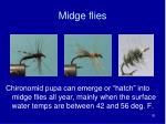 midge flies