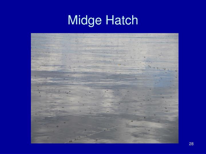 Midge Hatch