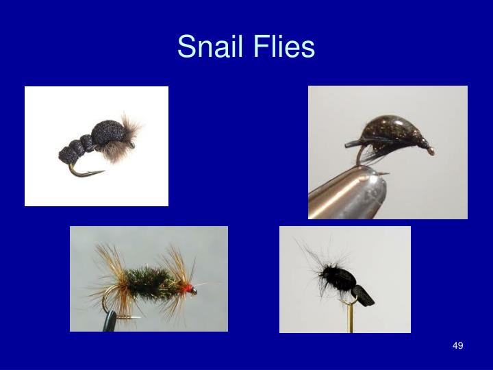 Snail Flies