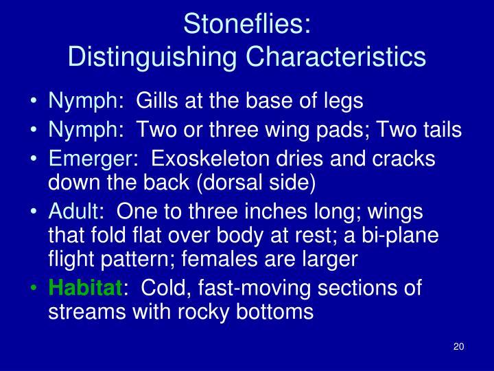 Stoneflies: