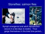 stoneflies salmon flies