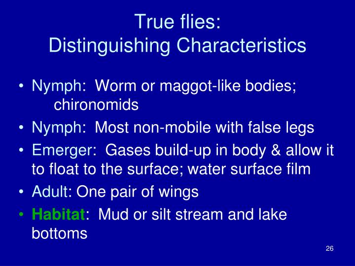 True flies: