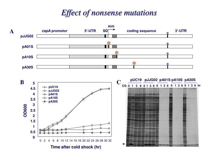 Effect of nonsense mutations