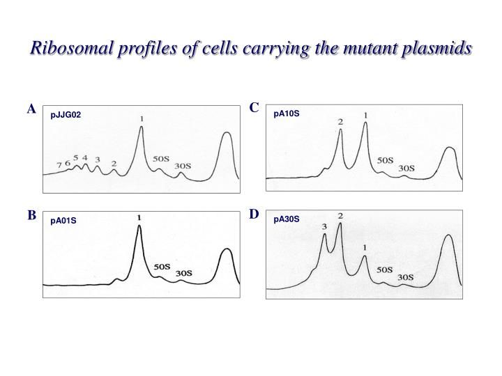 Ribosomal profiles of cells carrying the mutant plasmids