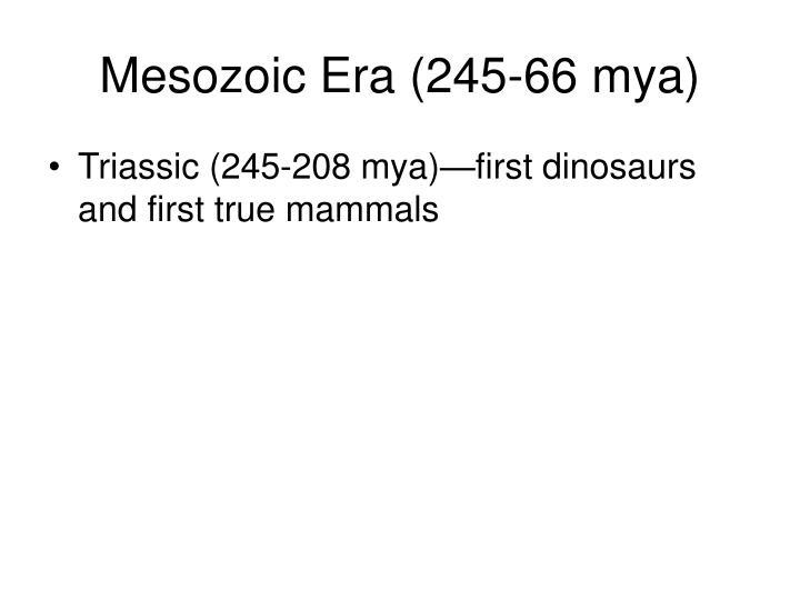 Mesozoic Era (245-66 mya)