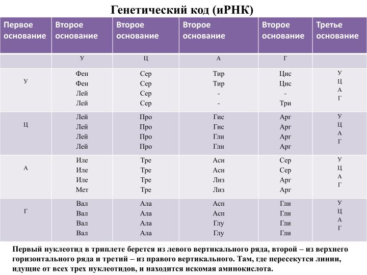 Генетический код (иРНК)