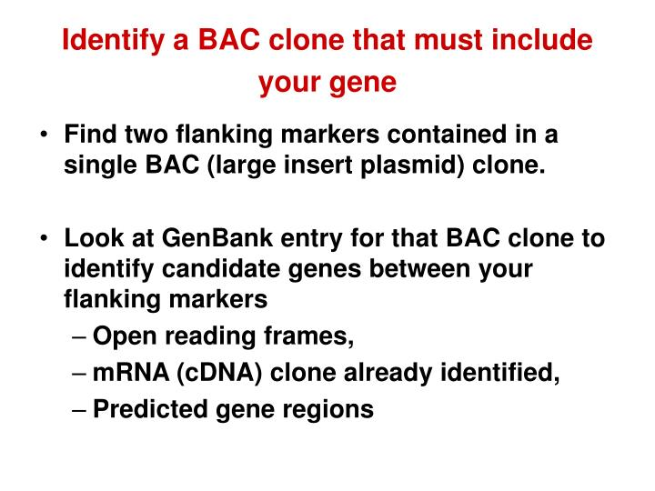 Identify a BAC clone that must include your gene