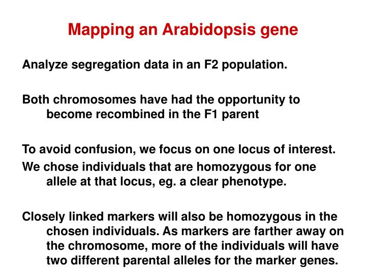 Mapping an Arabidopsis gene