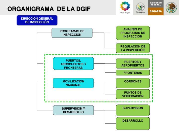 ORGANIGRAMA  DE LA DGIF