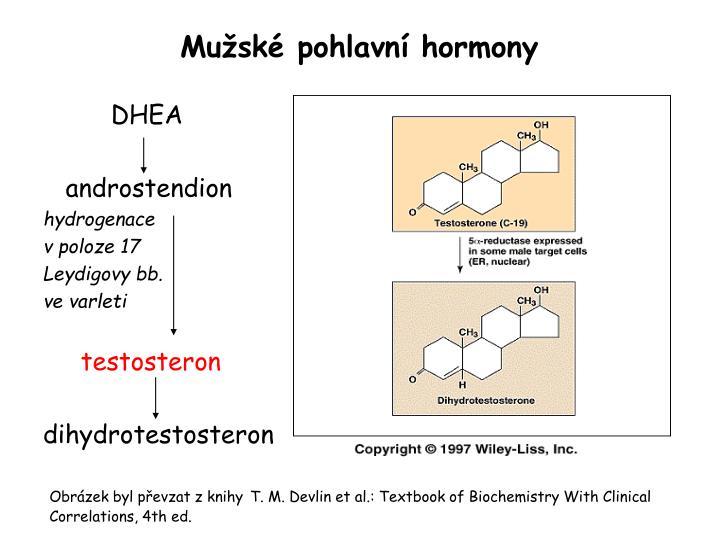 Mužské pohlavní hormony
