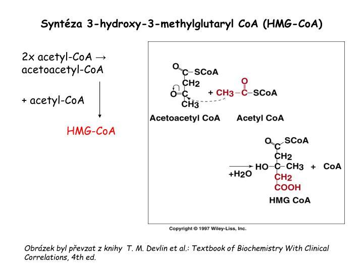 Syntéza 3-hydroxy-3-methylglutaryl CoA (HMG-CoA)
