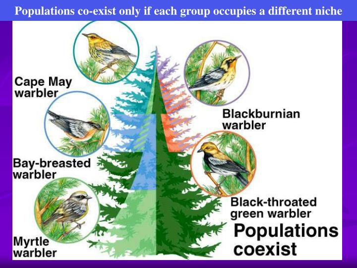 Populations co-exist only if each group occupies a different niche