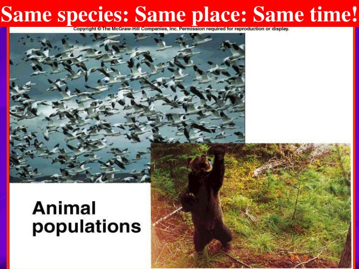 Same species: Same place: Same time!