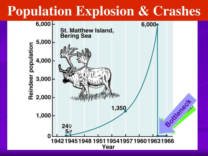 Population Explosion & Crashes