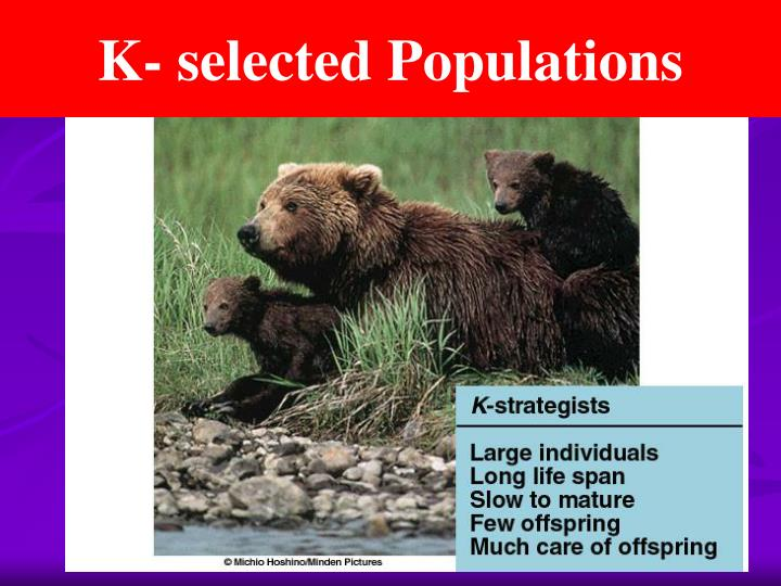 K- selected Populations