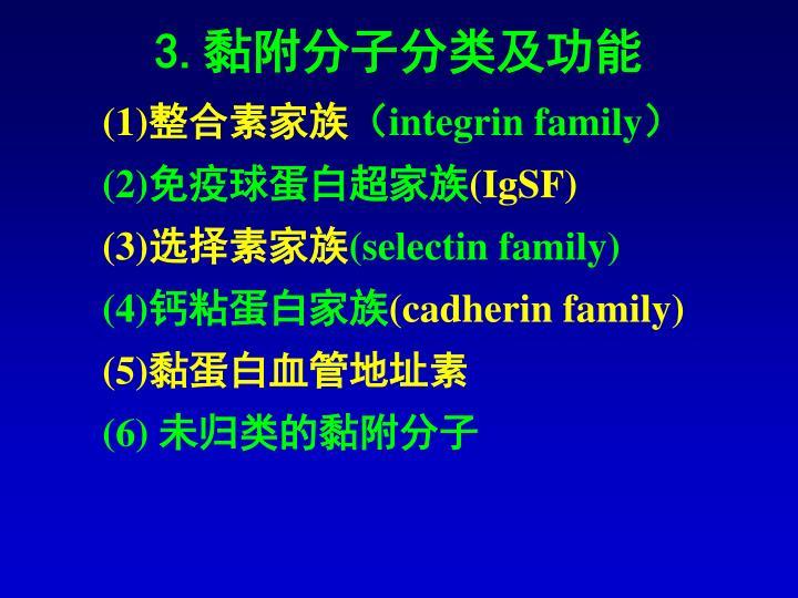 3.黏附分子分类及功能
