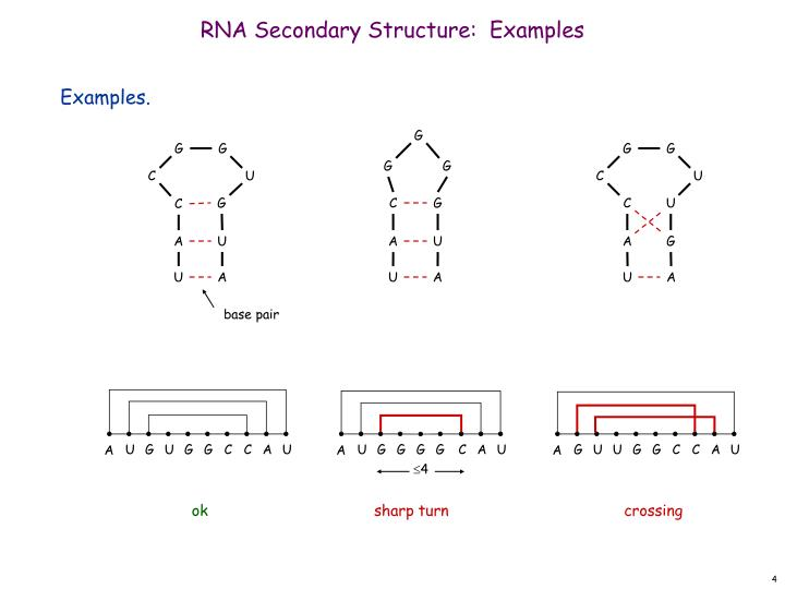 RNA Secondary Structure:  Examples