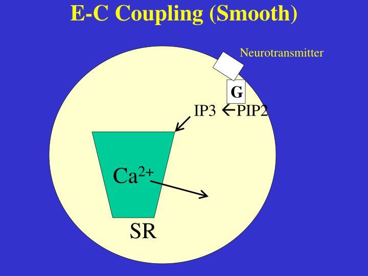 E-C Coupling (Smooth)