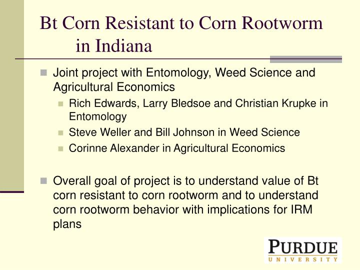 Bt corn resistant to corn rootworm in indiana
