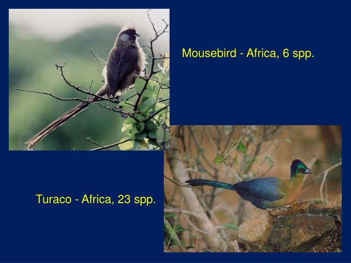 Mousebird - Africa, 6 spp.