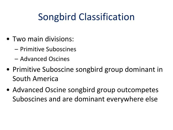 Songbird Classification