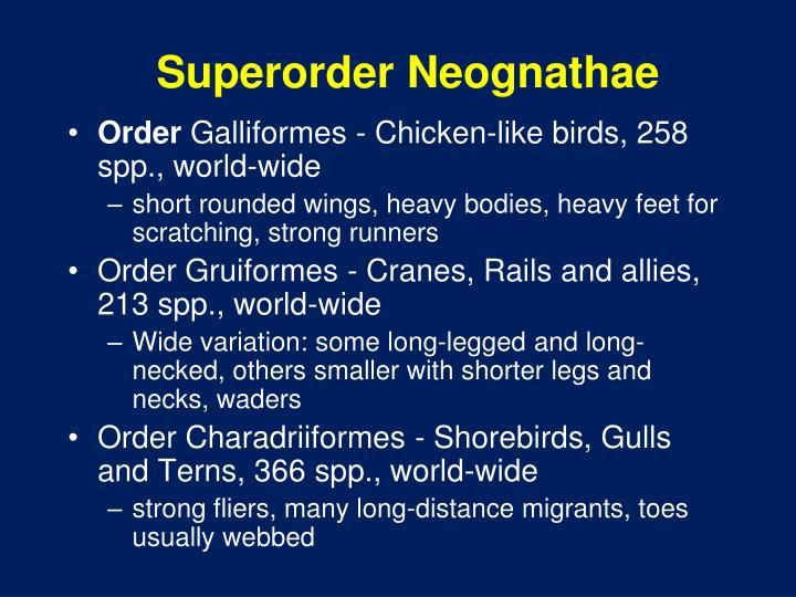 Superorder Neognathae