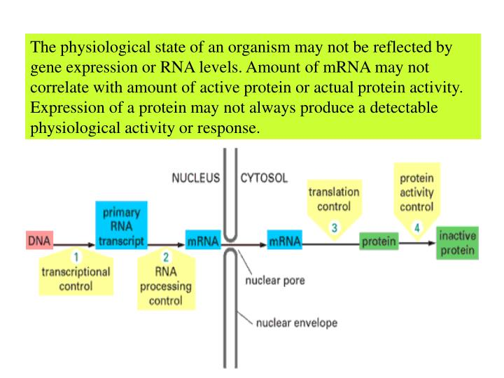 The physiological state of an organism may not be reflected by