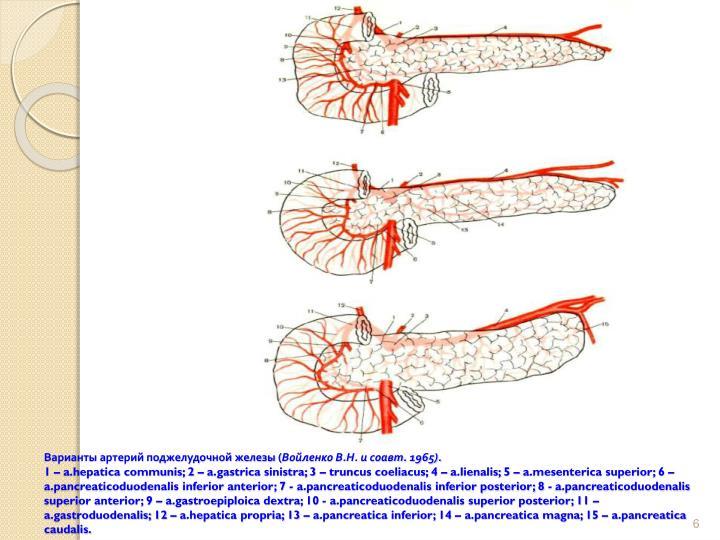 Варианты артерий поджелудочной железы (