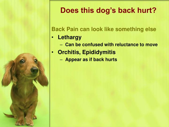 Does this dog's back hurt?