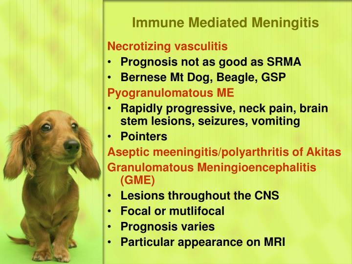 Immune Mediated Meningitis